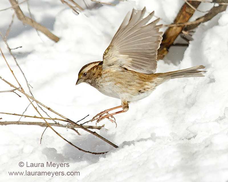 Special Birds In Flightlaura Meyers Nature Photograpy